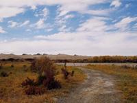 可可西里楚玛尔河工地附近的珍稀的植被